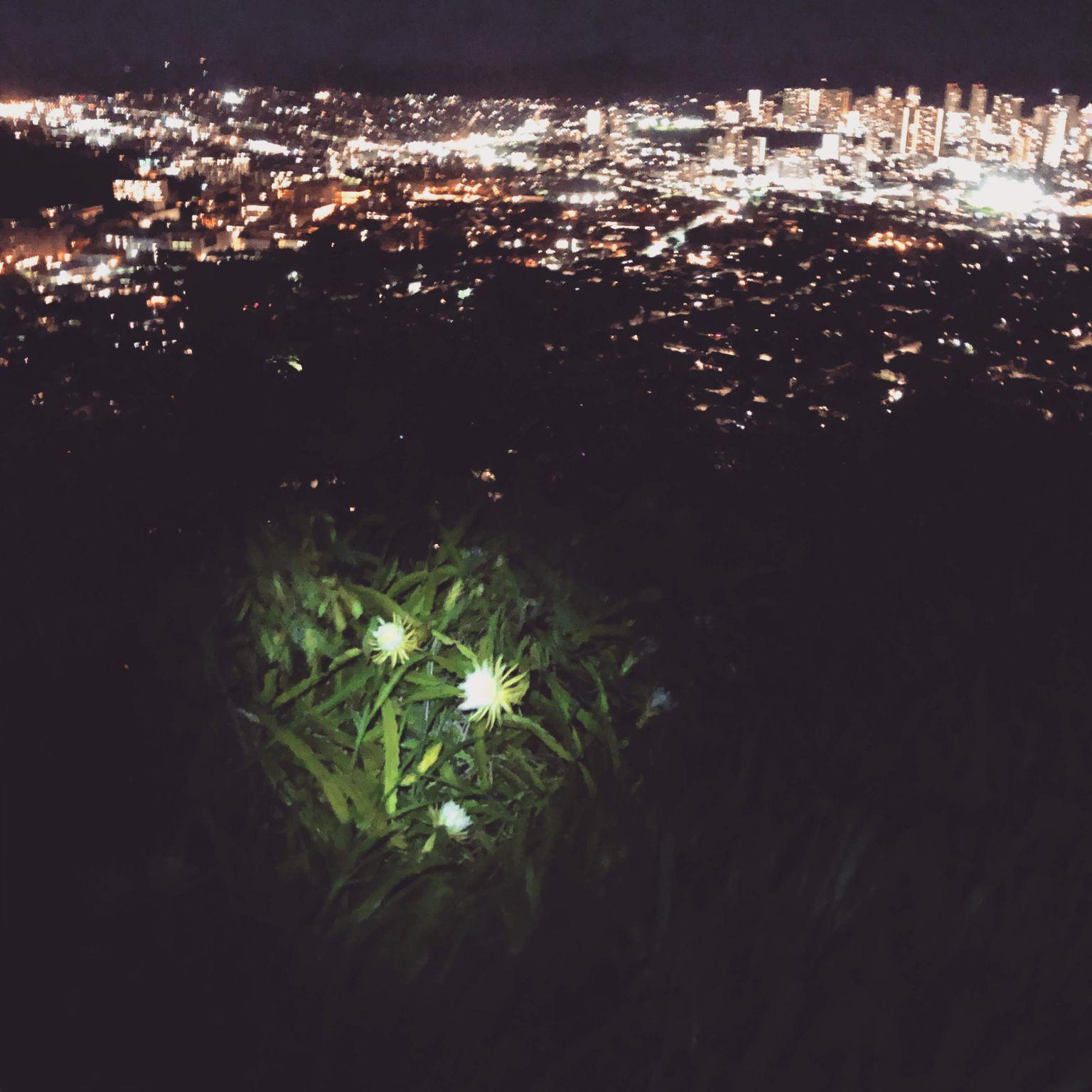 ベテランドライバーがハワイ随一の夜景スポットへご案内します!